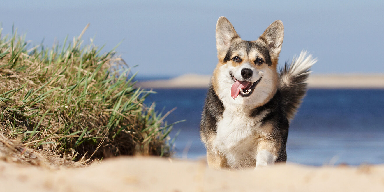 Glücklicher Hund am Meer