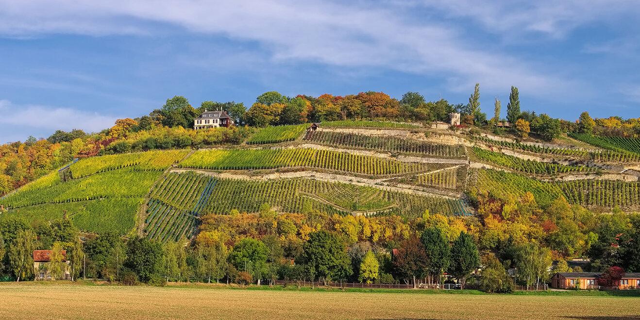 Traditionsreicher Weinanbau, Saale-Unstrut