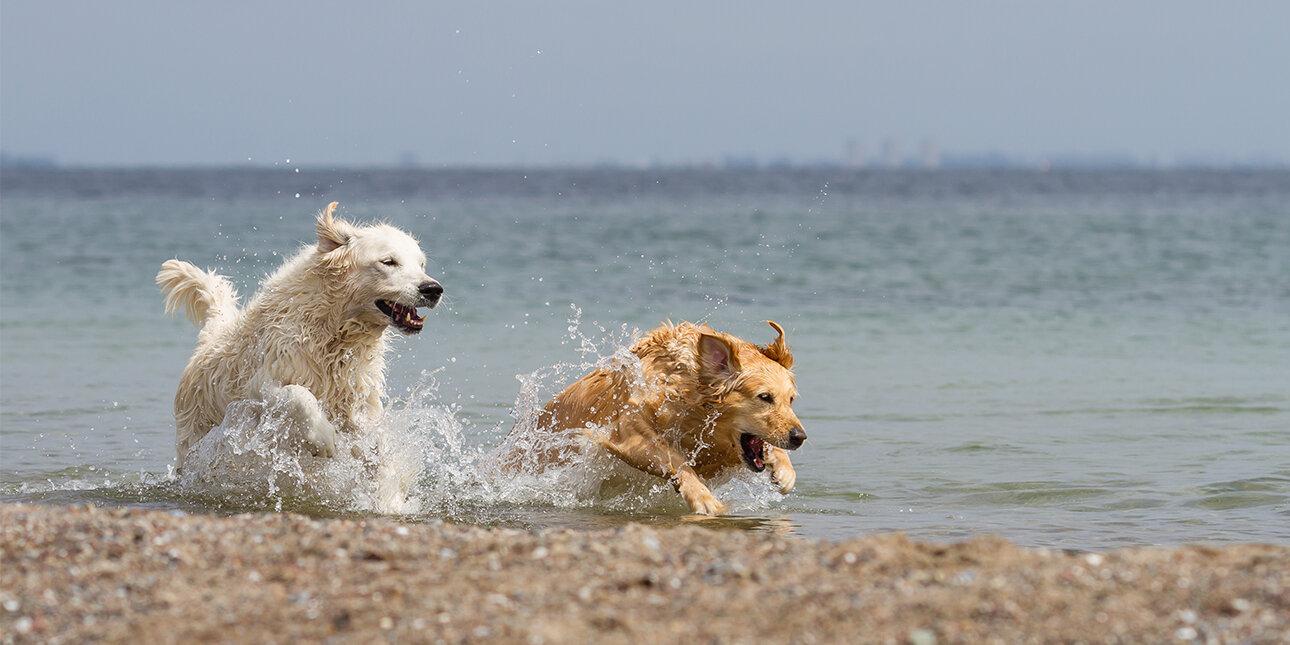 Nordsee-Urlaub mit Hund