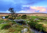 Erlebnisreise Wunderbares Südengland, Cornwall