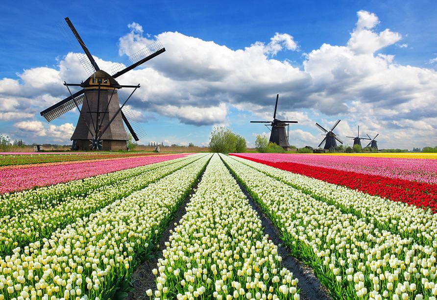 Best Western Plus Hotel Amstelveen, Tulpenmeer