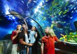 LEGOLAND® Deutschland Resort, Atlantis