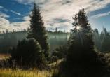Waldgebiet Lusen