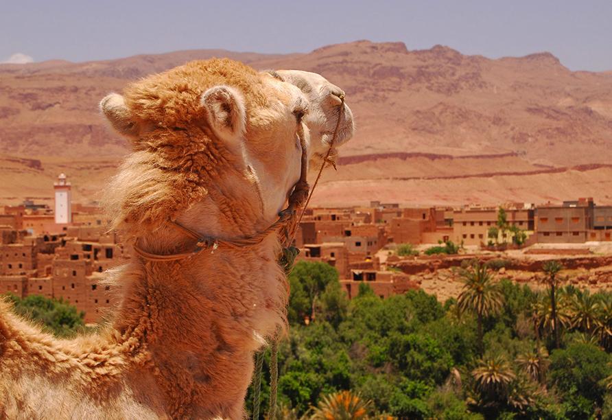 Busrundreise Marokko, Kasbah