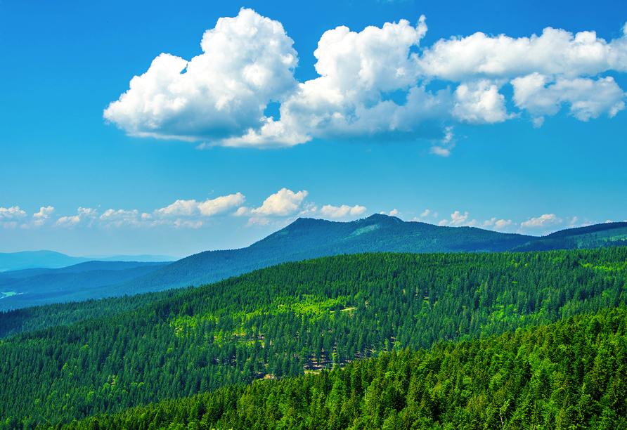 Genießen Sie die Schönheit des Bayerischen Walds.