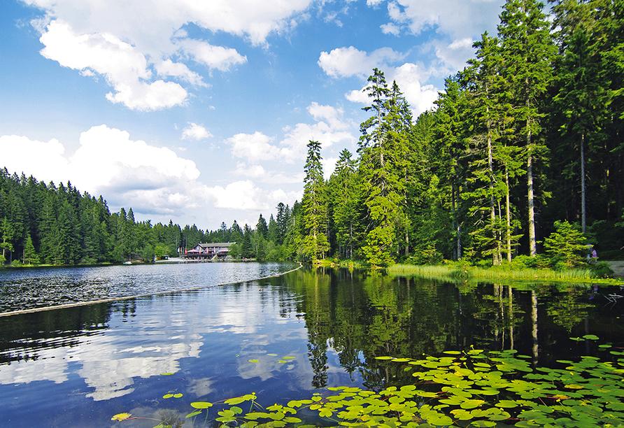 Ein tolles Ausflugsziel ist auch der Arbersee.