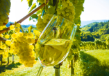 Rundreise Frankreich, Weinprobe