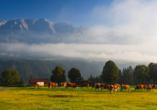 JUFA Schladming in der Steiermark Tierwelt