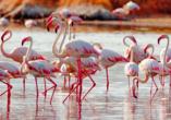 Real Marina Hotel & Spa, Flamingo