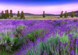 Rundreise entlang Ungarns Highlights, Landschaft, Tihany