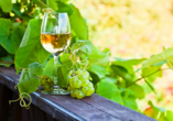 Mosel-Traumpfade, Wein