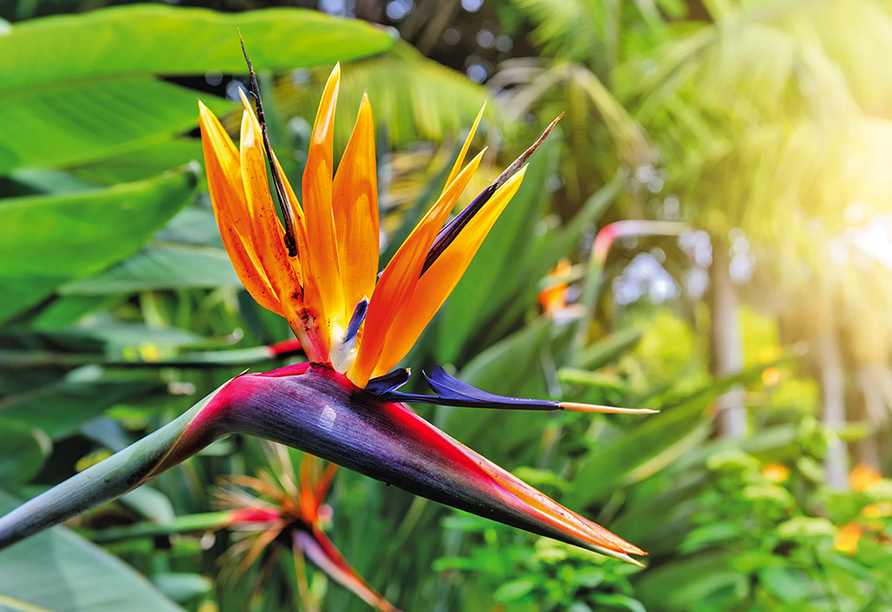 Melia Madeira Mare Resort & Spa, Blume