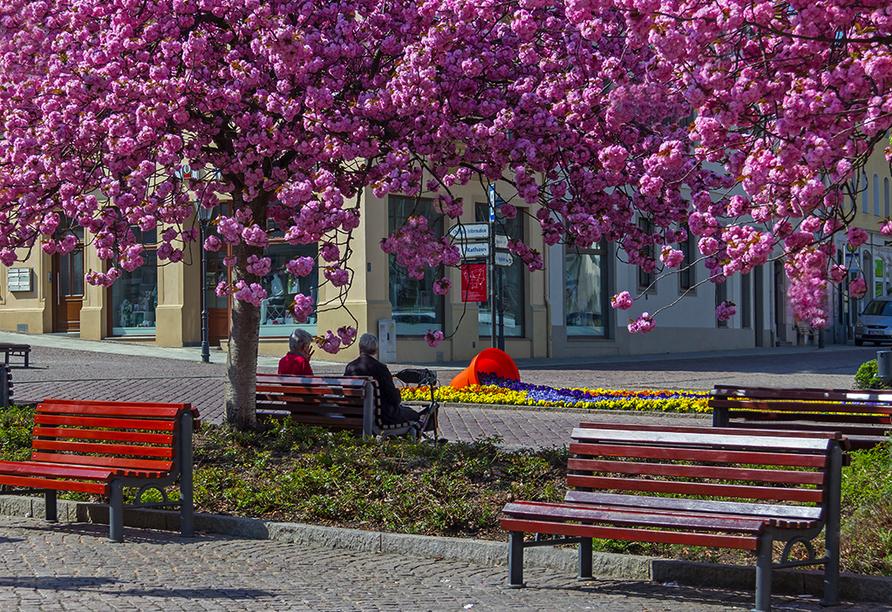 Hotel Gasthaus Zum Schwan in Oschatz, Markt mit Blumen