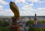 Unternehmen Sie einen Ausflug in die schöne Stadt Bad Kreuznach.