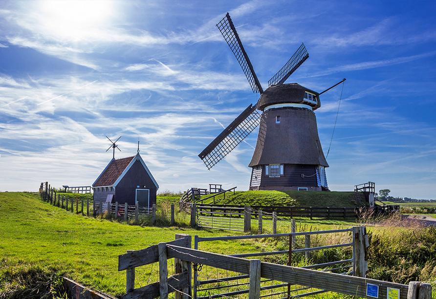 MS VistaSerenity, Hoorn