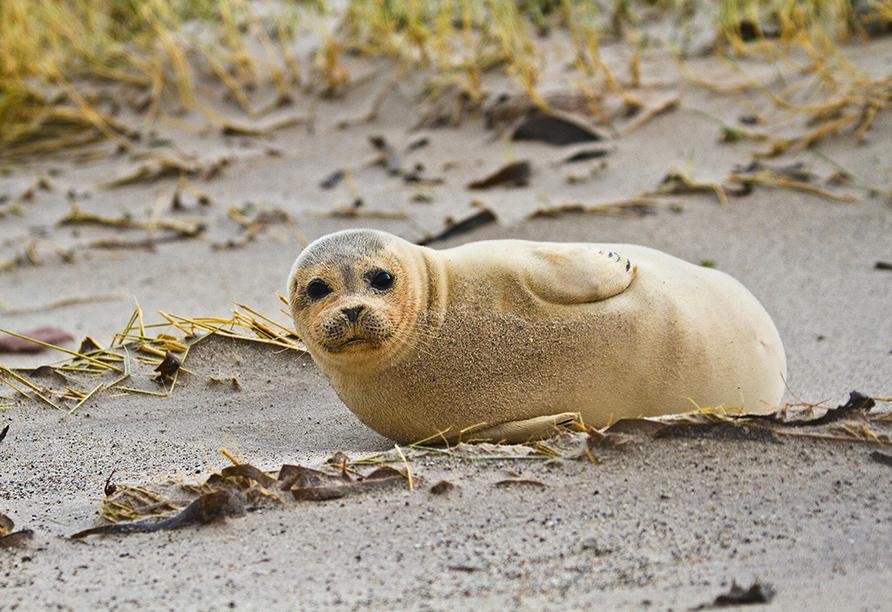 Vielleicht entdecken Sie ja einen Seehund am Strand.
