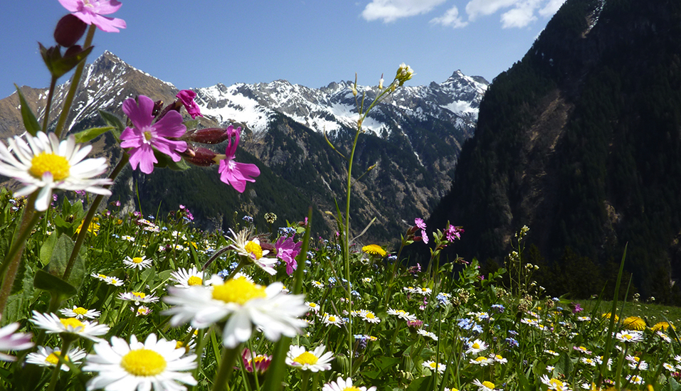 Sattleggers Alpenhof Landschaft Kärnten