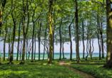 Hotel Prinzenpalais, Bad Doberan, Ostsee, Ausflugsziel Waldpfad