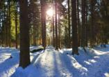SOIBELMANNS Hotel Alexandersbad, Verschneiter Wald im Fichtelgebirge