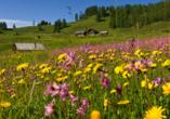 Genuss- und Vitalhotel Moisl in Abtenau, Wiese