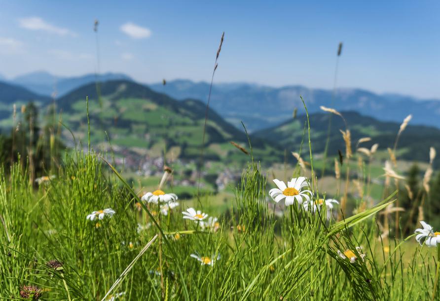 Herrliche Wiesen und wunderbare Berge erwarten Sie rund um Niederau.