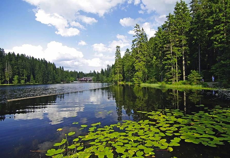 Das Waldkönig Ferienhotel in Bayerisch Eisenstein im Bayerischen Wald, Ausflugsziel Großer Arbersee