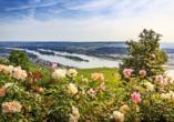 MS VistaSerenity, Rüdesheim am Rhein