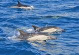 Rocamar Lido Resorts in Caniço, Delfinbeobachtung