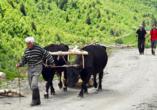 Geheimnisvoller Kaukasus, Pflug und Wanderer