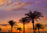 Hotel Occidental Playa de Palma, Palmen