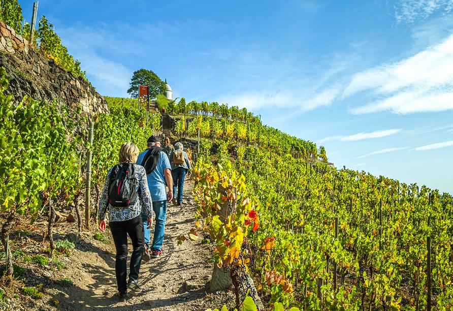 Die Weinberge bieten sich ideal für Wanderungen an.