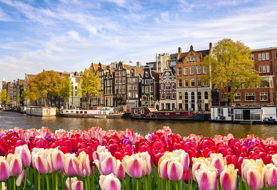 MS Lady Diletta, Amsterdam