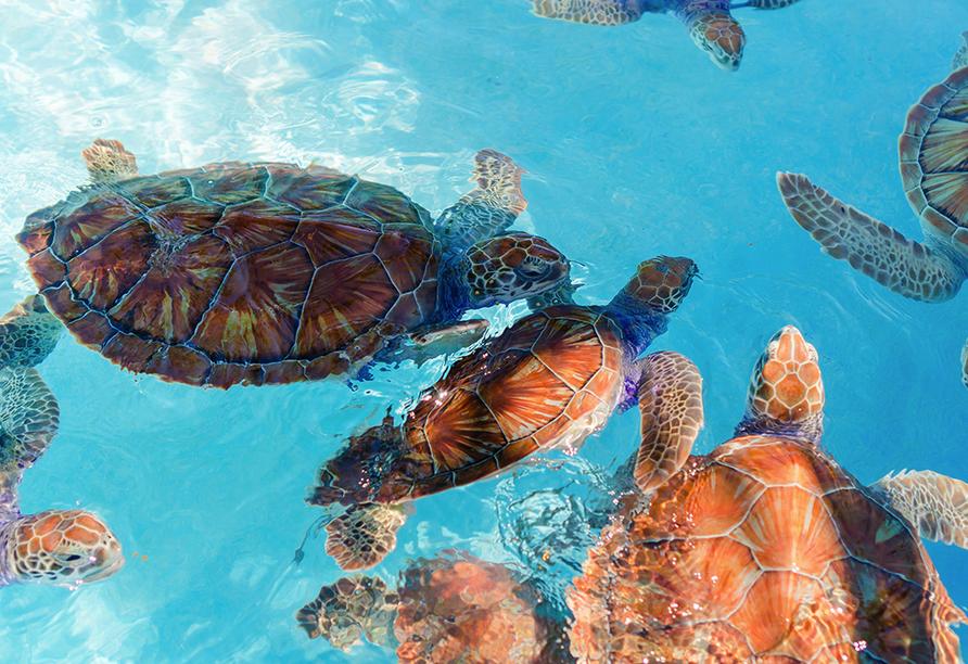 Costa Fascinosa, Schildkröten