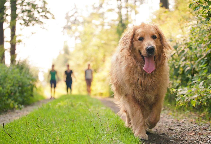 Spree-Waldhotel Cottbus, Spaziergang mit Hund