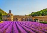 Rundreise Provence, Lavendel