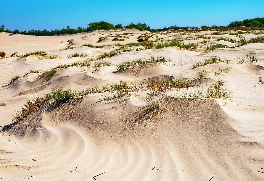 Der Nationalpark De Loonse en Drunense Duinen in der Provinz Nordbrabant besteht zu einem großen Teil aus trockenen Sandverwehungen und Nadelwäldern.