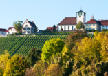 Der Weinanbau hat im Stromberg Tradition.