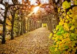 Der Laubengang im Schlosspark präsentiert sich in jeder Jahreszeit in einem neuen Bild.