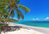 Costa Fascinosa, Guadeloupe