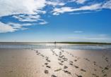 Erleben Sie eine beeindruckende Wanderung durch das Watt der Nordsee