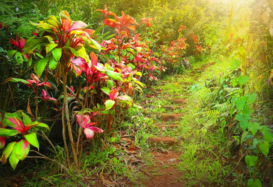 Sattes Grün und leuchtende Farben erwarten Sie im Black River Gorges Nationalpark.
