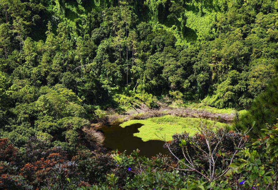 Eine Besichtigung des Vulkankraters Trou aux Cerfs steht auf Ihrem Ausflugsprogramm.