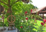 Hofimpression mit Blumen und Blick auf den Biergarten.