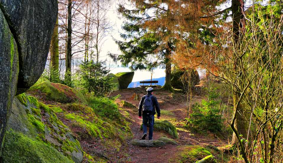 Wanderer im Nationalpark Harz.
