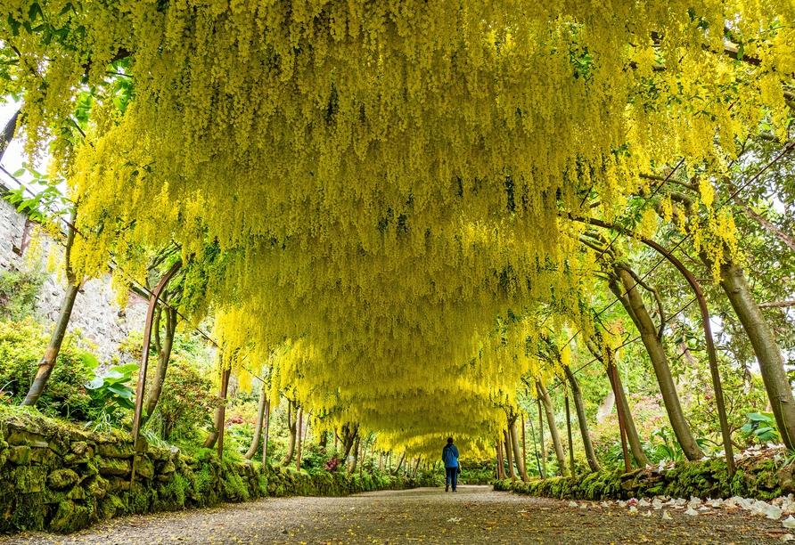 In North Wales besuchen Sie den bekannten Bodnant Garden.