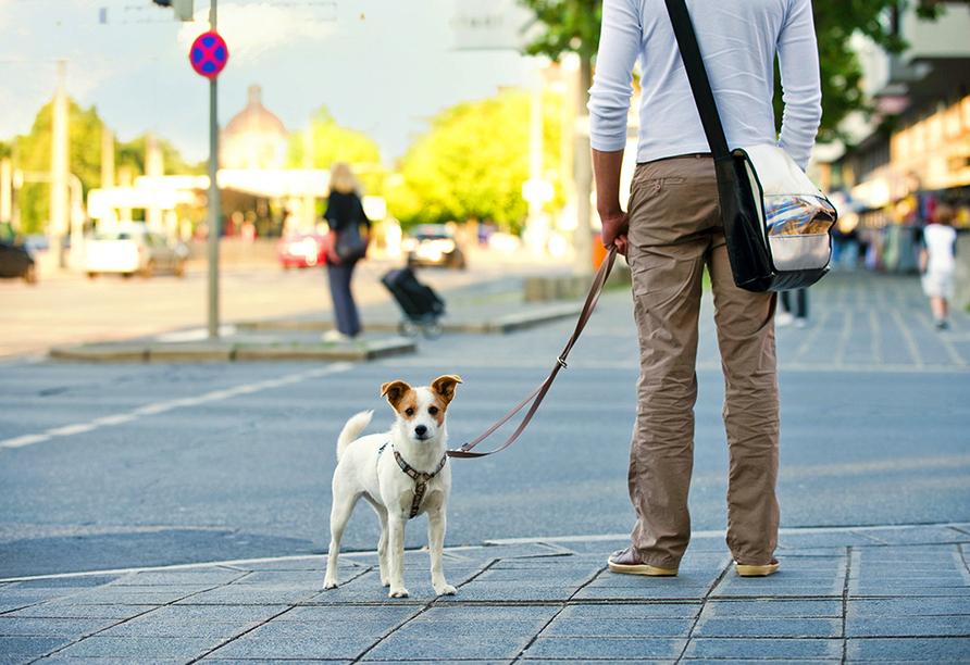 Mann und Hunde stehen in der Stadt.