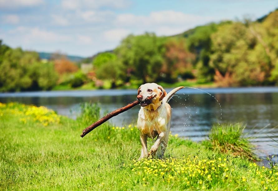 MS Normandie, Hund