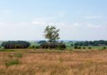 Ausblick auf Landschaft.