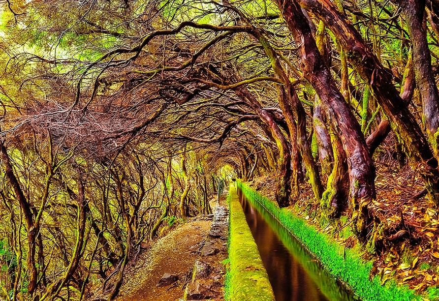 Eine Wanderung entlang der Levada do Furado ist eine ganz besondere Erfahrung.