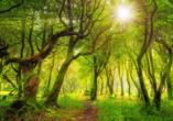 Erwandern Sie den spektakulären zum UNESCO-Weltnaturerbe gehörenden Laurissilva-Wald.